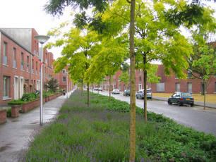 Bomen planten is ons werk. Detiger boomverzorging Venray voor boomcontrole, boomonderzoek en groeiplaatsverbetering.