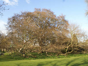 Wij helpen u met het kiezen van de juiste boom. Detiger boomverzorging Venray voor boomcontrole, boomonderzoek en groeiplaatsverbetering.