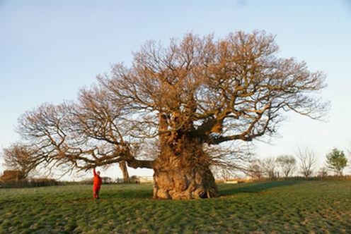 Boomverzorging zoals aanplant, snoeien, controle en kappen. Detiger boomverzorging Venray voor boomcontrole, boomonderzoek en groeiplaatsverbetering.